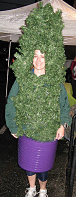 2011 -- this was intended to be a potted plant, but everyone called me a Christmas tree. This may come back in the future, fully decorated ...
